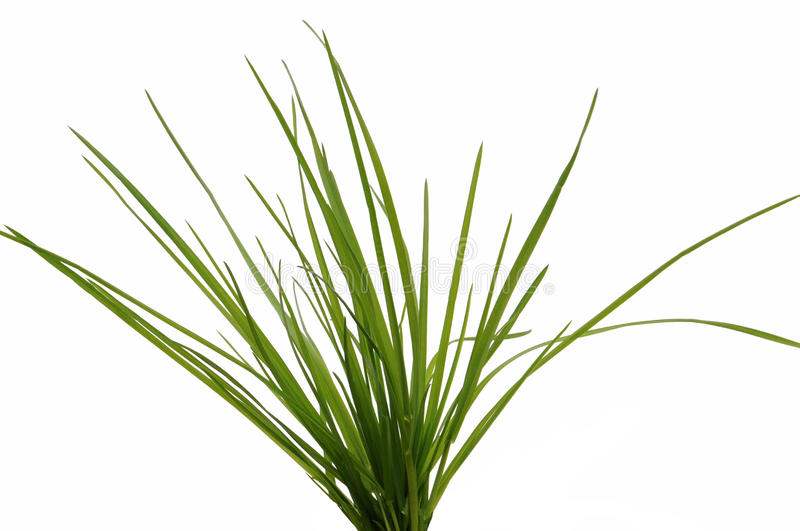 Bosje van gras stock foto's