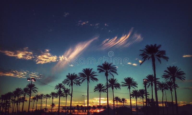 Bosje van luchtige wolken over palmen royalty-vrije stock foto's