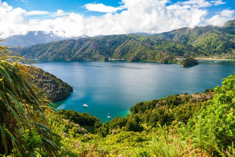 Bosjewapen van Koningincharlotte sound marlborough sounds south Eiland Nieuw Zeeland stock fotografie