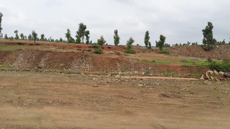 Bosland in sonebhadradistrict in India stock foto