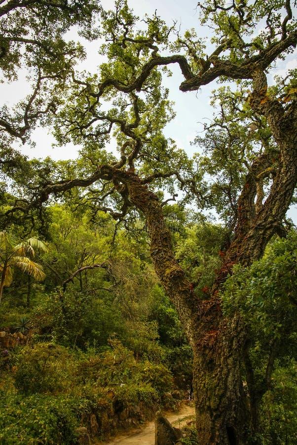 Boslandschap bij Monseraty-park, Cintra, Portugal stock foto's