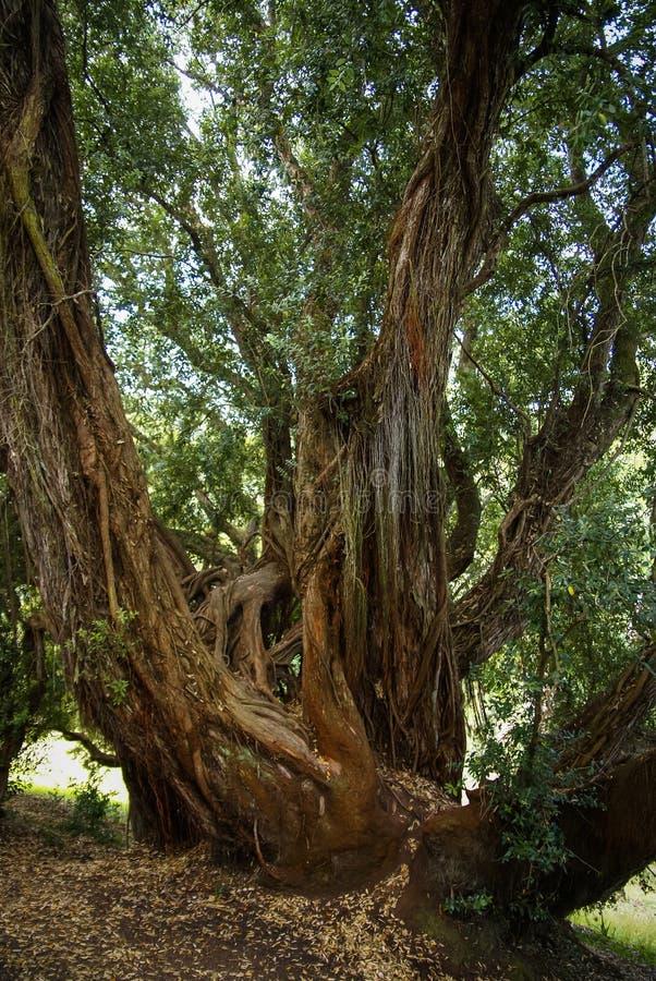 Boslandschap bij Monseraty-park, Cintra, Portugal royalty-vrije stock afbeelding