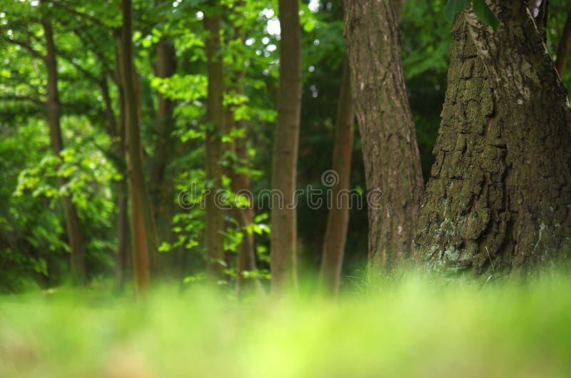 Boslandschap in de zomer stock foto's