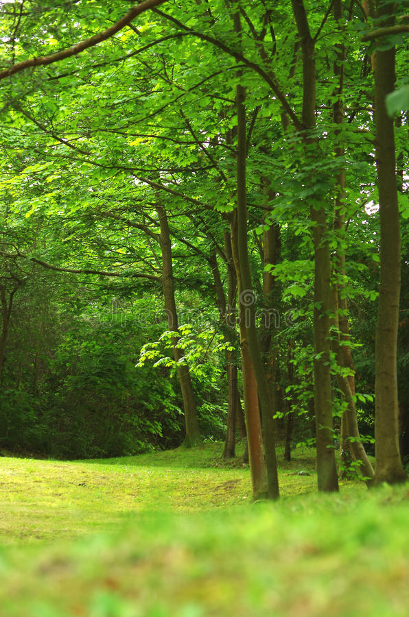 Boslandschap in de zomer royalty-vrije stock fotografie