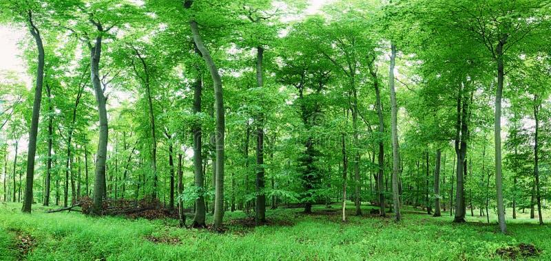 Boslandschap met groen gras en hout bij de lente royalty-vrije stock foto's