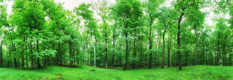 Boslandschap met groen gras en hout bij de lente royalty-vrije stock afbeeldingen