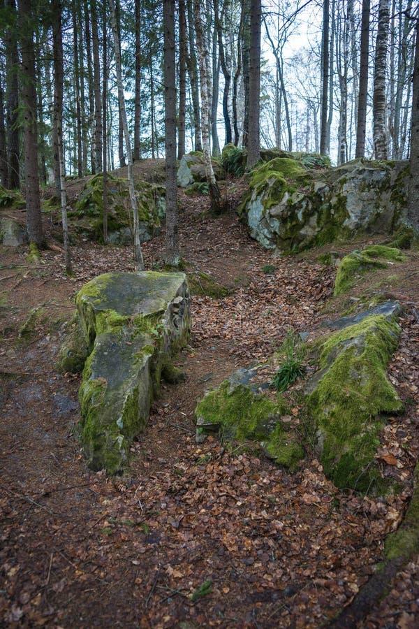 Boslandschap op duivels` s regeling in Kaluga-gebied royalty-vrije stock afbeelding