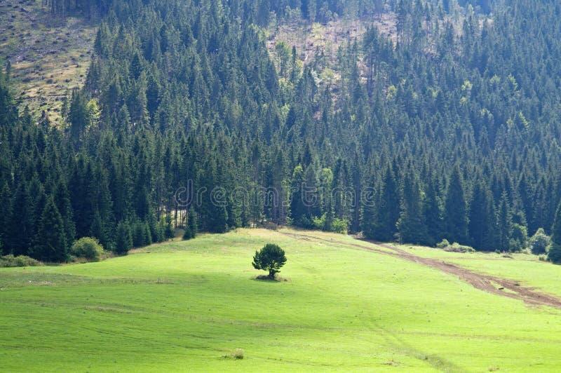 Boslandschap van de boom het alleen berg royalty-vrije stock afbeelding