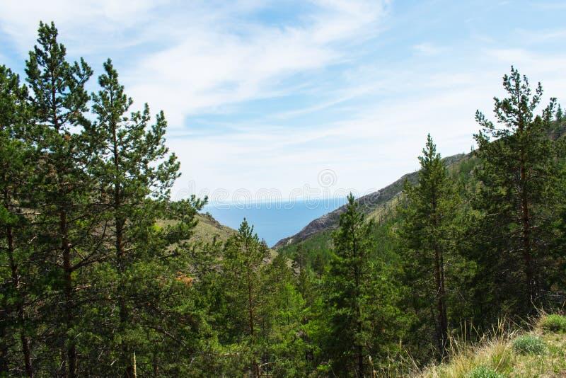 Boslandschap van de pijnboom het boszomer Bergen meer in Dali royalty-vrije stock afbeeldingen