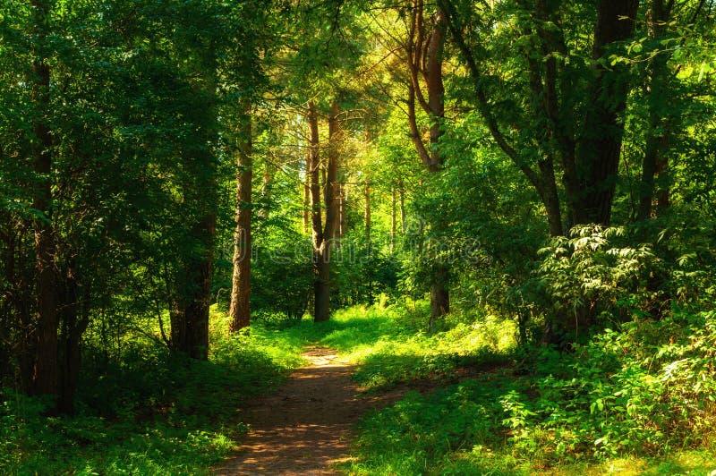 Boslandschap in zonnig weer - bosbomen en smalle die weg door zacht zonlicht worden aangestoken Bosaard in zonnige dag royalty-vrije stock foto's