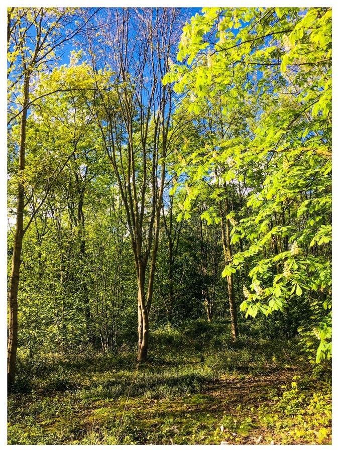 Boslandschapszon en groene bomen stock afbeeldingen