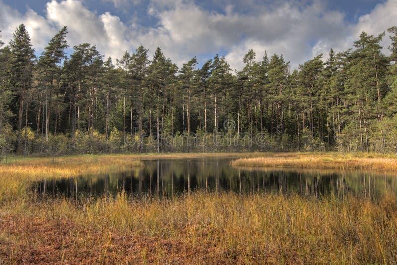 Bosmeer met pijnbomen in HDR stock afbeeldingen