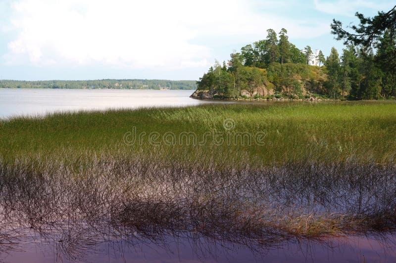 Bosmeer onder blauwe hemel in het riet in het bos stock foto