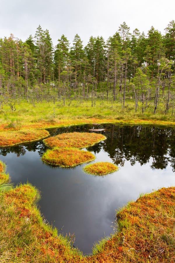 Bosmeer op een moeras stock foto