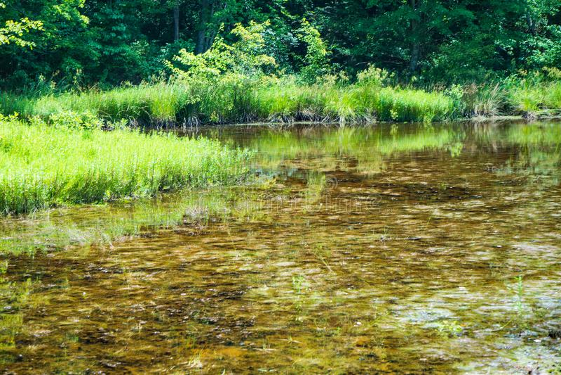 Bosmoeras in Craig County, Virginia, de V.S. royalty-vrije stock foto's