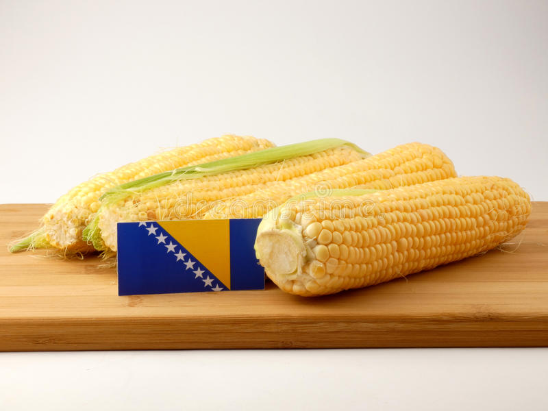 Bosnia and Herzegovina flag on a wooden panel with corn isolated royalty free stock image