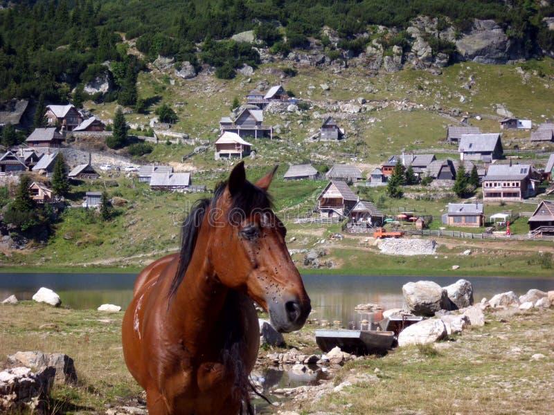 Bosnian mountain horse,Prokosko Lake Vranica Bosnia and Herzegovina. Bosnian mountain horses on the glacier lake of Vranica mountains Bosnia and Herzegovina royalty free stock photos