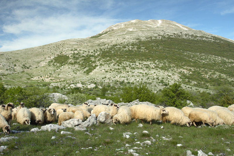 Bosnien som betar herzegovina får royaltyfri fotografi