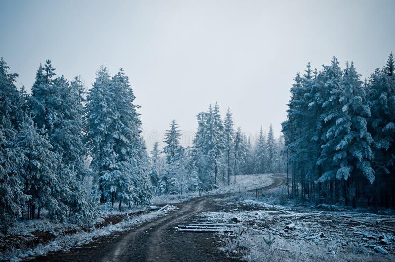 Bosopen plek waardoor de weg naar de bergen gaat Morni stock afbeeldingen