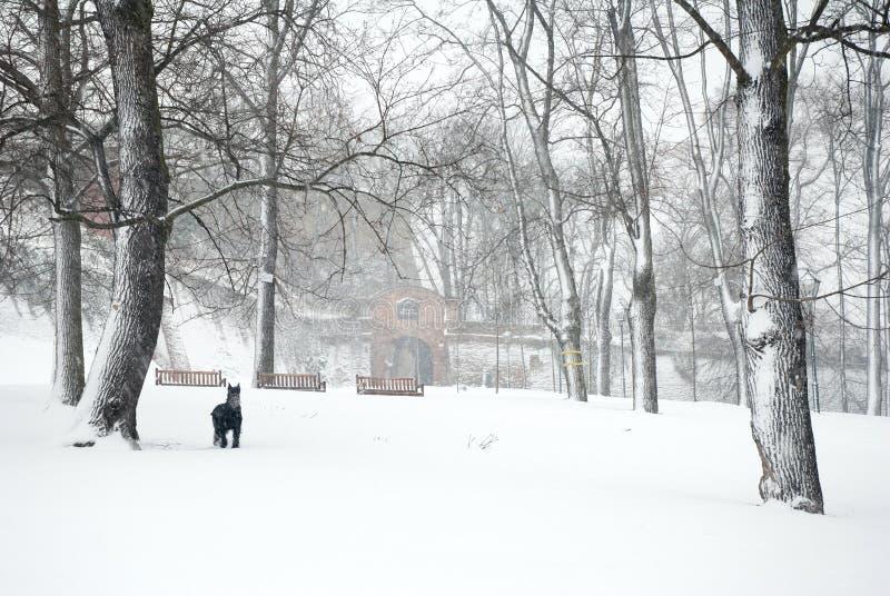 Bospark in zwaar sneeuwonweer stock fotografie