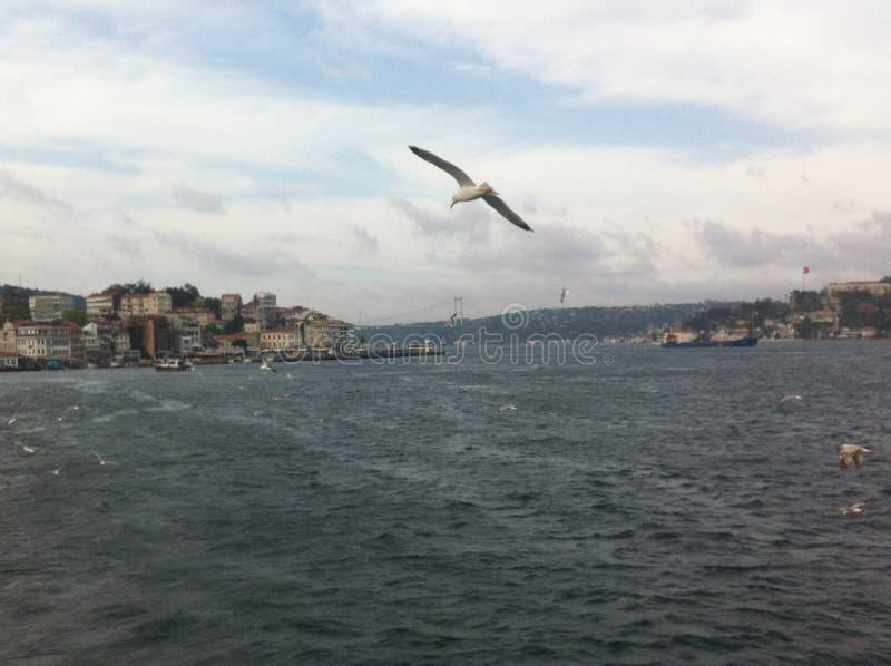 Bosphorus kanal royaltyfria bilder