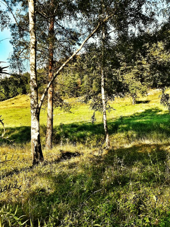 Bosque, árbol, hierba, naturaleza imagen de archivo libre de regalías