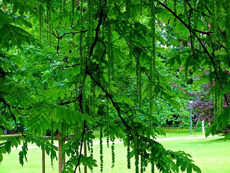 bosque, árbol, naturaleza, verde, árboles, paisaje, primavera, madera, hoja, verano, parque, bosque, follaje, ambiente, camino, l foto de archivo