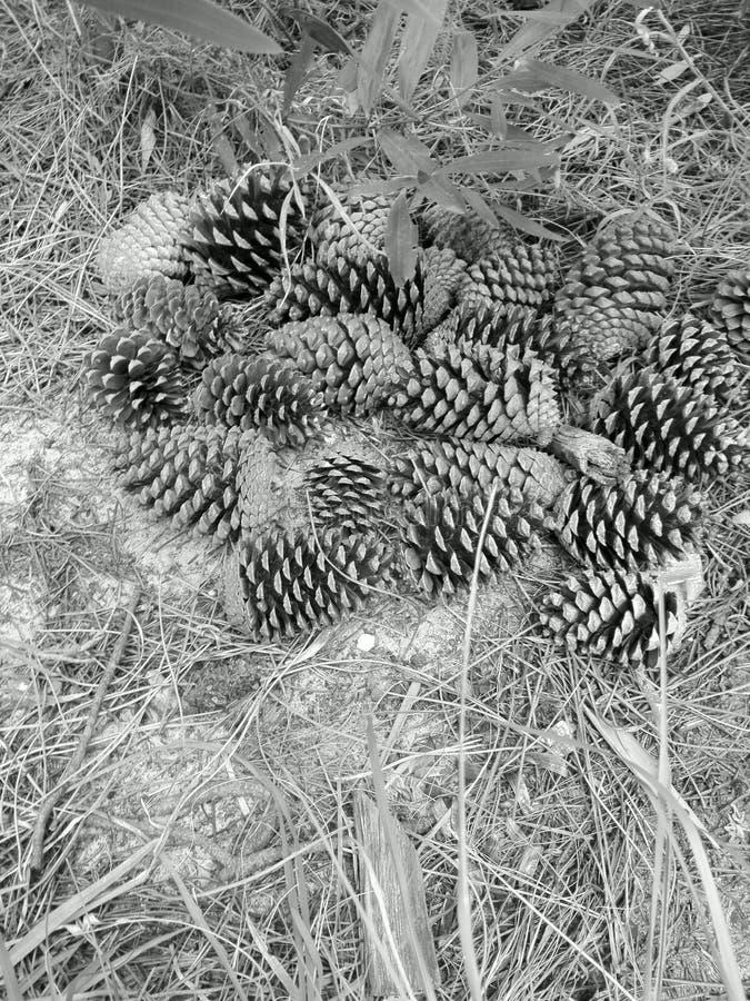 bosque stock foto