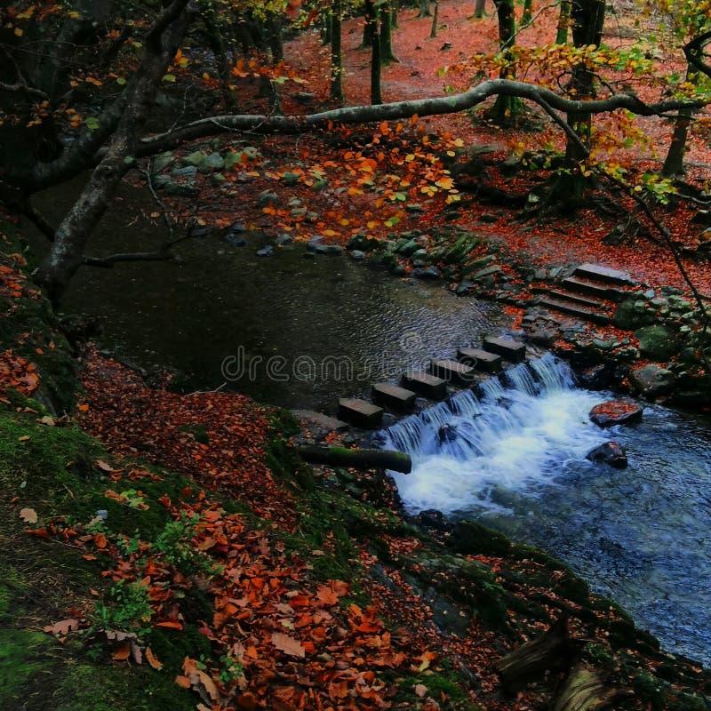Bosque foto de archivo libre de regalías
