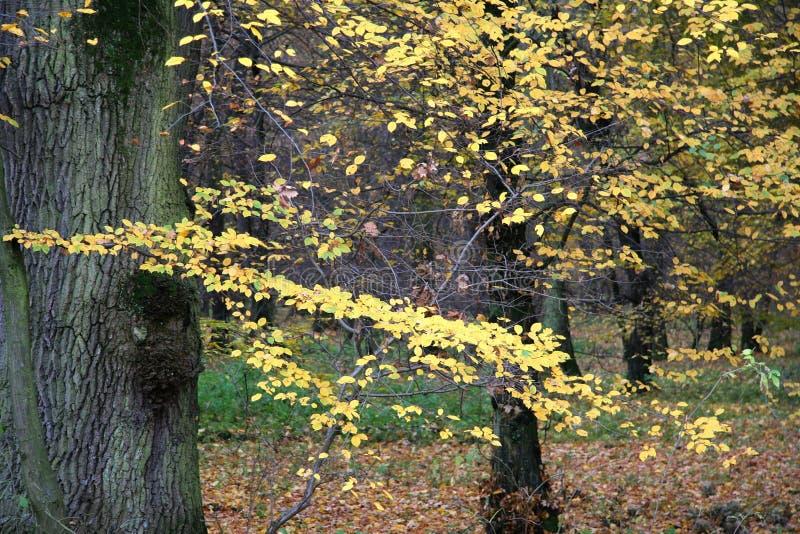 Bosque 2 del otoño fotografía de archivo libre de regalías