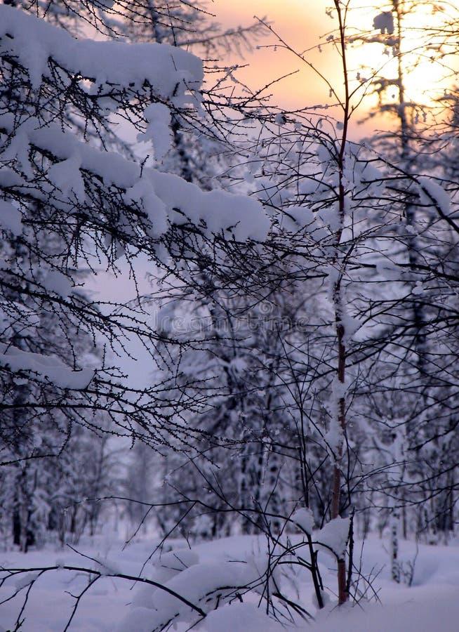 Bosque. imagenes de archivo