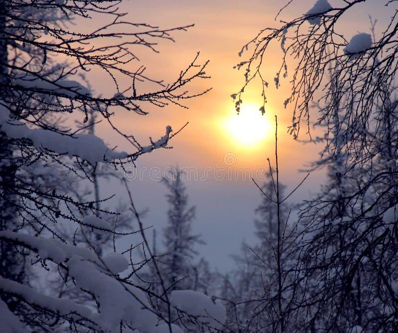 Bosque. fotos de archivo libres de regalías