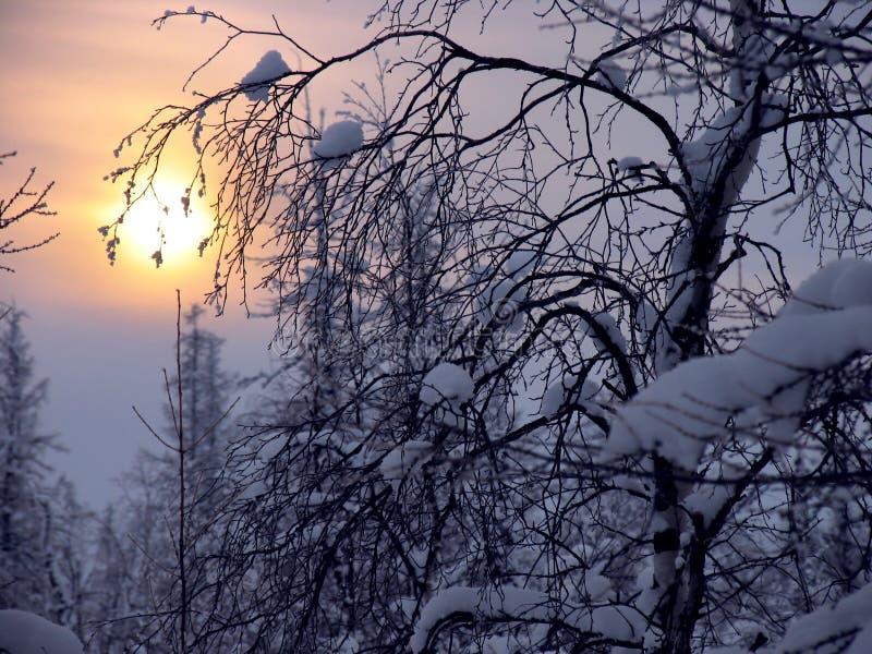 Bosque. imagen de archivo