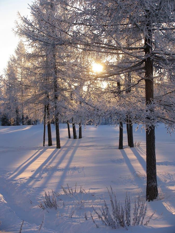 Bosque. fotografía de archivo libre de regalías