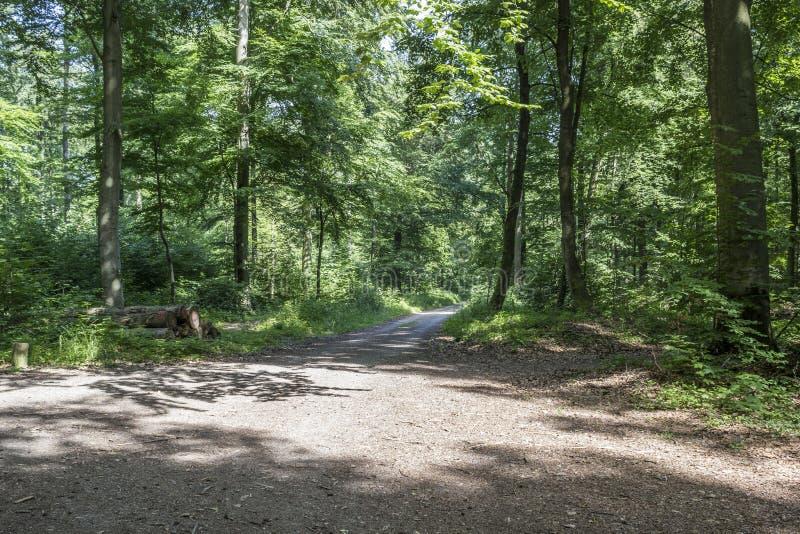Download Bosque foto de archivo. Imagen de registro, silvicultura - 41906572