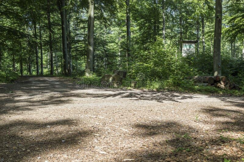Download Bosque imagen de archivo. Imagen de leña, timberland - 41906579