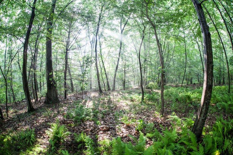 Download Bosque foto de archivo. Imagen de hojas, habitat, nordestal - 41912978