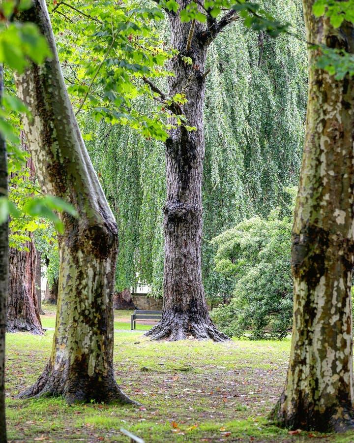 bosque immagine stock