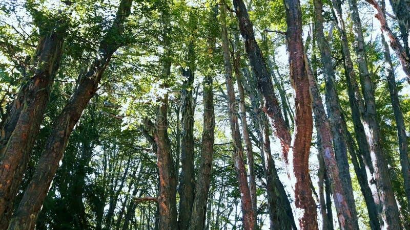 Bosque1 immagini stock libere da diritti