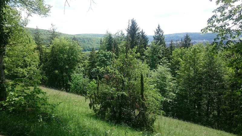 Bosque alemán imagen de archivo