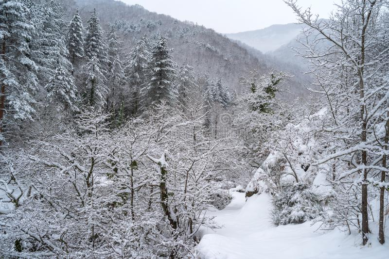 Bosque alpestre Nevado fotos de archivo