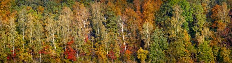 Bosque anaranjado, rojo y verde hermoso del otoño, muchos árboles en el panorama anaranjado de las colinas Bandera larga del web  imagen de archivo libre de regalías