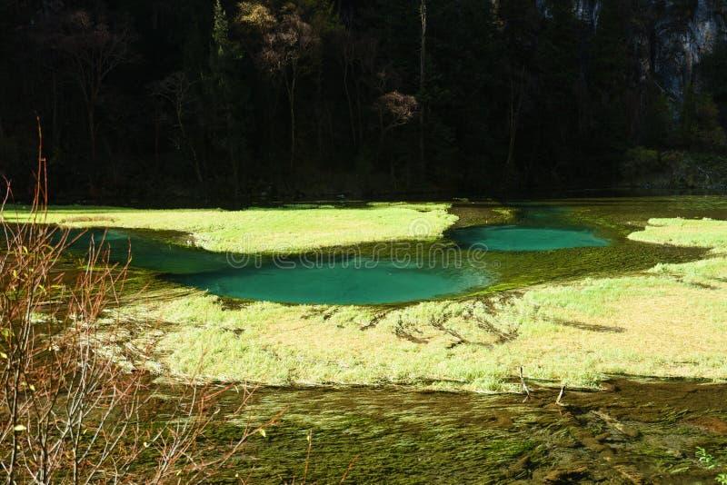 Download Bosque Antiguo Y Piscina Deposicional Mineral Del Lago Foto de archivo - Imagen de seda, montaña: 64203418
