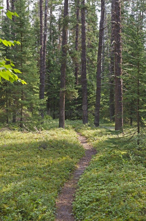 Bosque asoleado fotografía de archivo libre de regalías