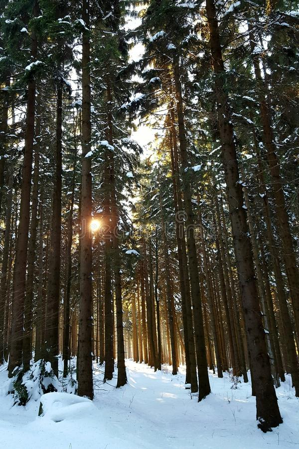 Bosque asoleado imágenes de archivo libres de regalías