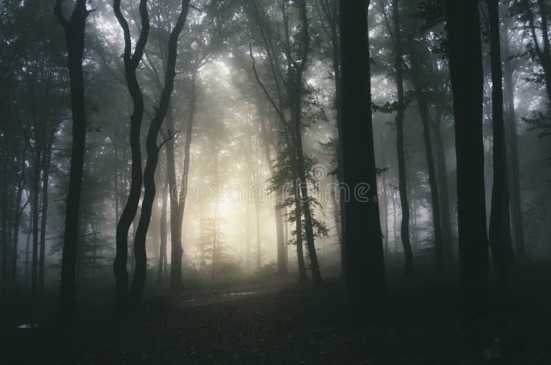 Bosque asustadizo con niebla en Halloween imagenes de archivo