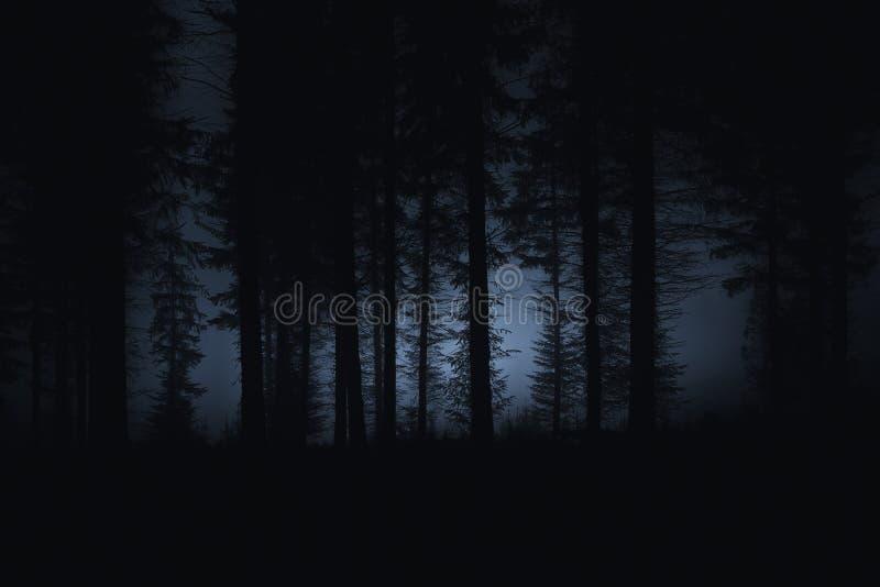 Bosque asustadizo oscuro fotografía de archivo