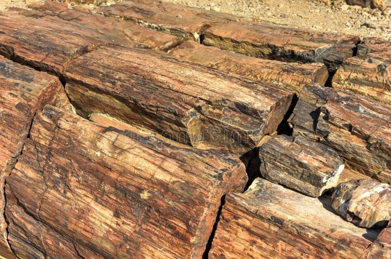 Bosque aterrorizado, Namibia imagen de archivo