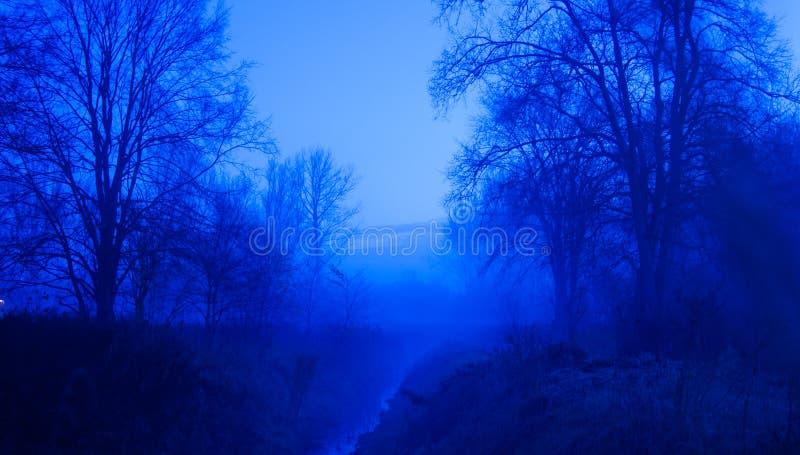 Download Bosque azul foto de archivo. Imagen de noche, misterioso - 41901224