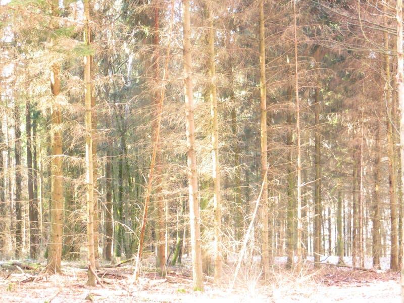 Bosque bajo luz del sol fotografía de archivo